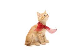 white för kattunge för bow ljust rödbrun isolerad bunden red Arkivbilder