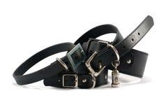 white för läder för bakgrundskragehund Royaltyfria Bilder