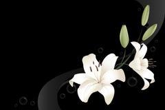 white för liljar två stock illustrationer