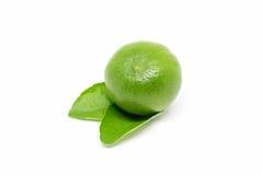 white för ny limefrukt för frukt för bakgrund tropisk saftig Royaltyfri Foto