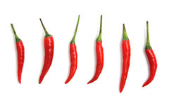 white för peppar för bakgrundschili varm isolerad röd Arkivfoto