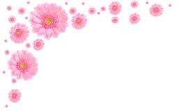 white för pink för bakgrundsblommaram Arkivbilder