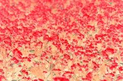white för pink för parchment för blomningblomma naturlig Royaltyfri Foto