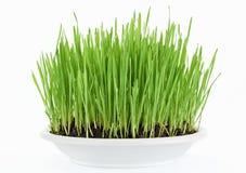 white för platta för ny gräsgreen ny Royaltyfria Bilder