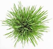 white för platta för ny gräsgreen ny Royaltyfri Fotografi