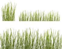 white för rader två för gräs grön Arkivfoton