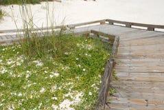 white för strandboardwalksand royaltyfri foto