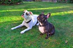 white för svart hund royaltyfri fotografi