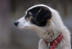 white för svart hund royaltyfri foto