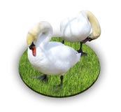 white för swans två Fotografering för Bildbyråer