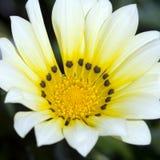 white för tid för blommamakrofjäder Arkivfoton