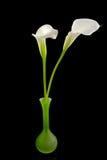 white för vase för callablommagreen lilly Arkivbilder