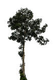 white för vektor för tree för bakgrundsillustration bild isolerad Royaltyfria Foton