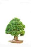 white för vektor för tree för bakgrundsillustration bild isolerad Royaltyfria Bilder