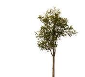 white för vektor för tree för bakgrundsillustration bild isolerad Arkivfoton