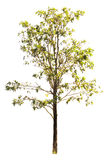 white för vektor för tree för bakgrundsillustration bild isolerad Arkivfoto