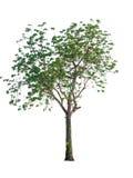 white för vektor för tree för bakgrundsillustration bild isolerad Royaltyfri Fotografi