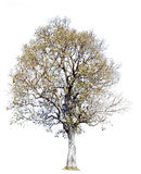 white för vektor för tree för bakgrundsillustration bild isolerad Naturobjekt Fotografering för Bildbyråer