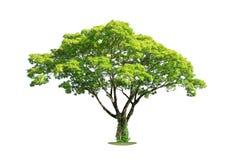 white för vektor för tree för bakgrundsillustration bild isolerad Snabb bana Royaltyfri Fotografi
