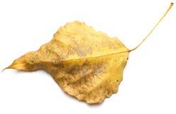 white för vektor för leaf för höstbakgrundsillustration Royaltyfria Bilder