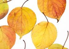 white för vektor för leaf för höstbakgrundsillustration Arkivbild