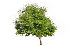white för vektor för tree för bakgrundsillustration bild isolerad Arkivbild