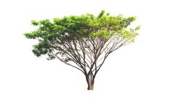 white för vektor för tree för bakgrundsillustration bild isolerad Arkivbilder