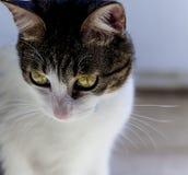 1 white för version för pott för svart färg för katt 2 rastrerade Arkivfoto