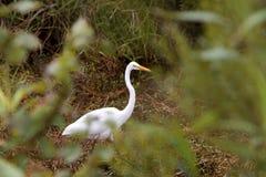 white för voronezh för ryss för natur för områdesegretheron Arkivbilder
