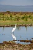 white för voronezh för ryss för natur för områdesegretheron Fotografering för Bildbyråer