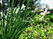 white f?r blommaskogfj?der royaltyfri bild