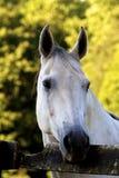White Face Royalty Free Stock Photo