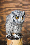White faced owl on wood log. Wood background Royalty Free Stock Photos