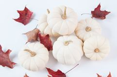 White fall pumpkins Stock Photo