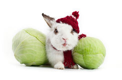 White fancy rabbit with cabbage Royalty Free Stock Images
