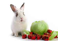 White fancy rabbit with cabbage and gift boxes Stock Image