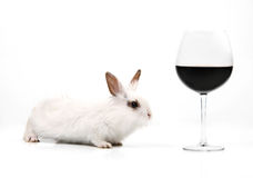 White fancy rabbit and glass of red wine. On the white background Royalty Free Stock Images