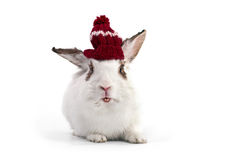 White fancy rabbit in knitted cap Royalty Free Stock Photo