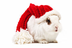 White fancy rabbit in a knitted cap over white Stock Images