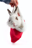 White fancy rabbit in Santa hat Royalty Free Stock Images