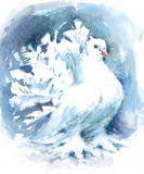 White Fantail Pigeon Bird Watercolor Illustration Hand Painted Stock Image