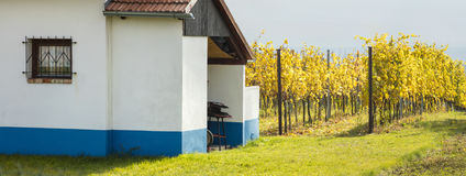 White farm house and vineyard field. In Czech Republic stock images