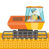 A white farmer harvests wheat. A white farmer harvests wheat on a field. A man farming with a harvester. Agriculture concept. Vector cartoon illustration Royalty Free Stock Images