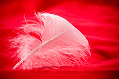 White feather Royalty Free Stock Photos