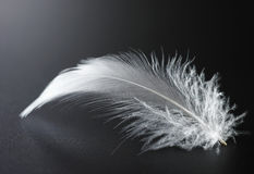 White feather. Closeup of white feather in black background Stock Photos