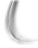 White feather Stock Image