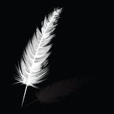 White feather Royalty Free Stock Photography