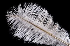 White feather Stock Images