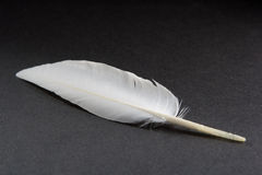 White feather. On a black surface Royalty Free Stock Images