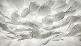 White feather background. White feather of bird for background image Stock Photography